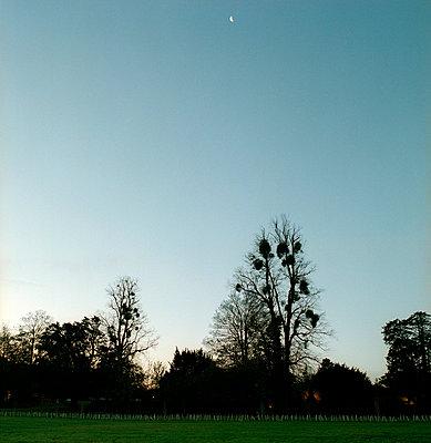 Bäume bei Morgendämmerung - p3880353 von Ulrike Leyens
