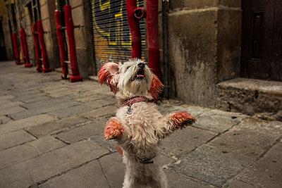 Begging - p858m853007 by Lucja Romanowska