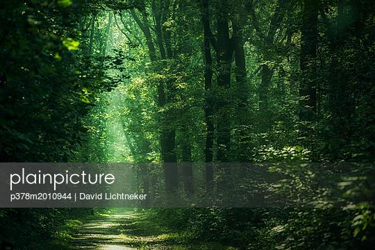 p378m2010944 von David Lichtneker