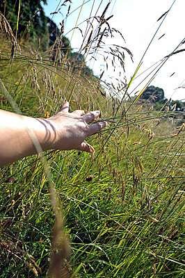 Hand pushing grass aside in a fie - p1047m814769 by Sally Mundy