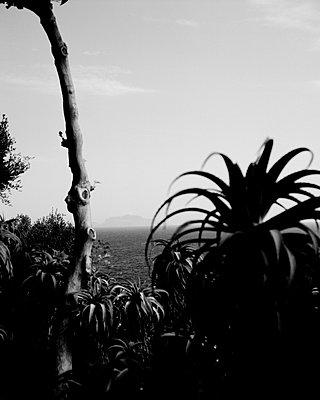 Blick auf Capri vom Castello Aragonese, Insel Ischia - p1493m1586013 von Alexander Mertsch