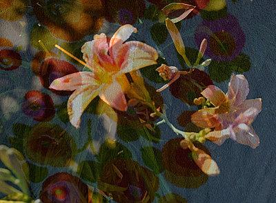 Iris blossoms - p1229m2100193 by noa-mar