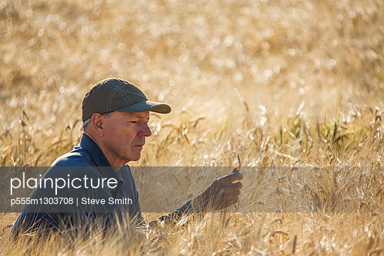 Caucasian farmer crouching in field checking crop - p555m1303708 by Steve Smith