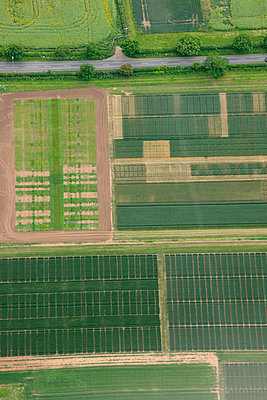 Aerial view of green and brown vegetable fields - p1048m2088014 by Mark Wagner