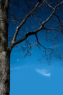 Dead Tree - p1331m1169250 by Margie Hurwich