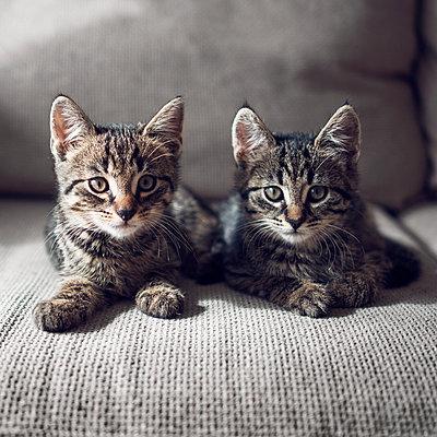 Kittens - p1507m2027754 by Emma Grann