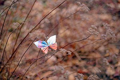 Butterfly, folded money - p715m2173240 by Marina Biederbick