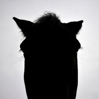 Pferd - p8290240 von Régis Domergue