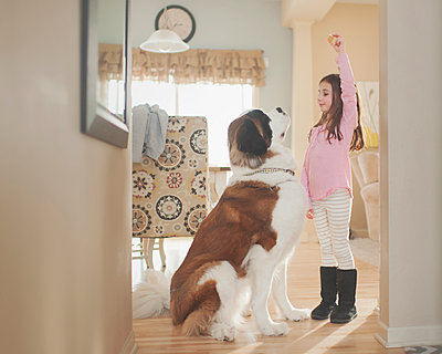 Side view of girl playing with Saint Bernard at home - p1166m1230445 by Cavan Images