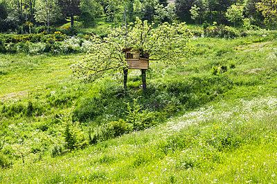 Cabin in a tree - p445m1153156 by Marie Docher