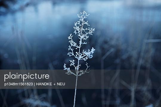 p1348m1561823 by HANDKE + NEU