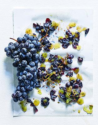 Blaue Trauben - p1397m2054584 von David Prince