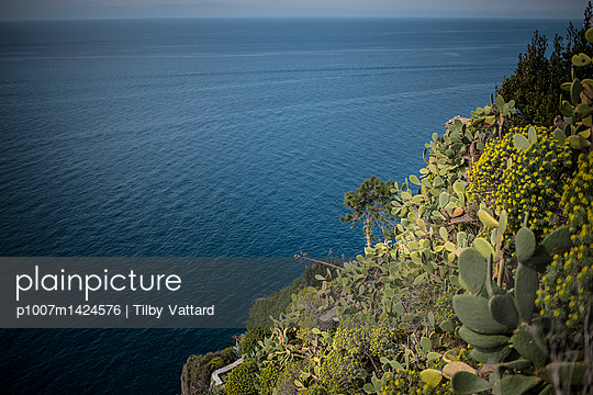 Mediterranean sea and cactus plants - p1007m1424576 by Tilby Vattard