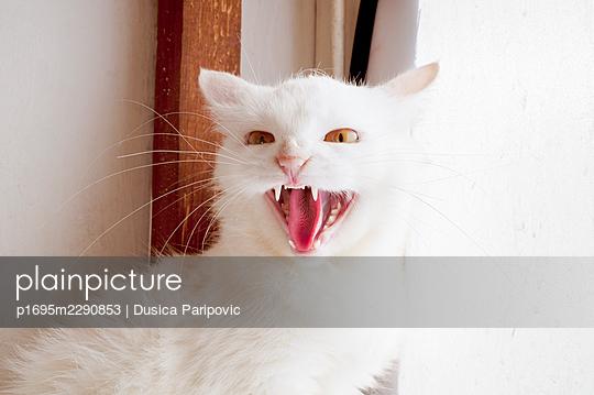 Hissing - p1695m2290853 by Dusica Paripovic