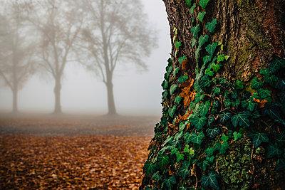 Bäume im Nebel - p305m1091378 von Dirk Morla
