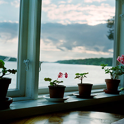 Potted plants in windowsill Sweden. - p5281089 by Johan Willner