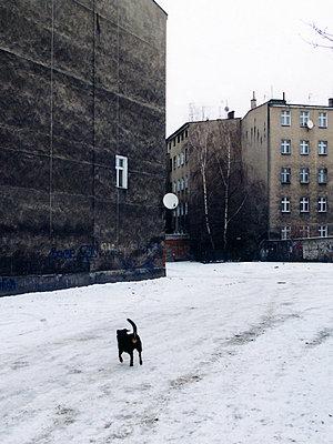 Hund in einem verschneiten Hinterhof in Stettin - p627m1035935 von Christian Reister