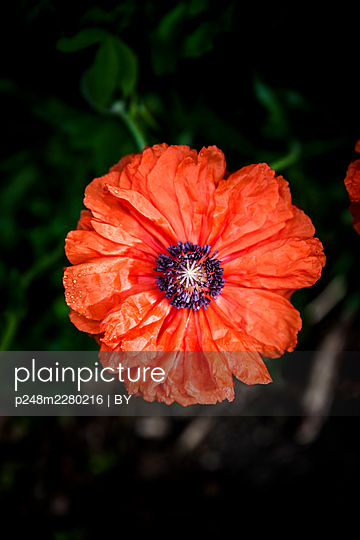 p248m2280216 by BY