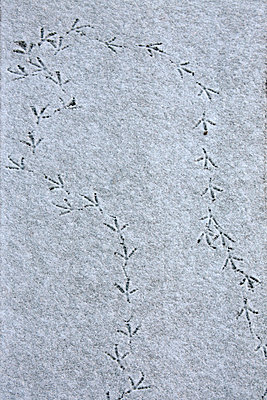 Bird tracks on snow - p3007757f by Tanja Luther