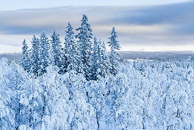 p312m1570355 von Mikael Svensson