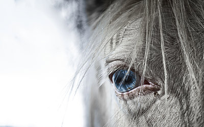 Close-up of blue Horse eye and face set against white sky - p1166m2096430 by Cavan Images