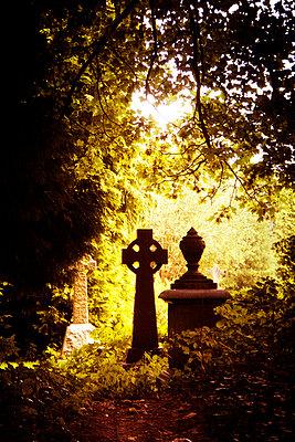 Gravestones in dark cemetery - p597m901734 by Tim Robinson