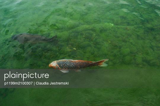 Fish - p1199m2100307 by Claudia Jestremski