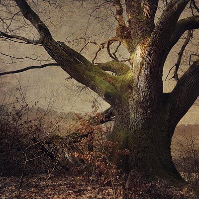 The Forest King - p1633m2209091 by Bernd Webler