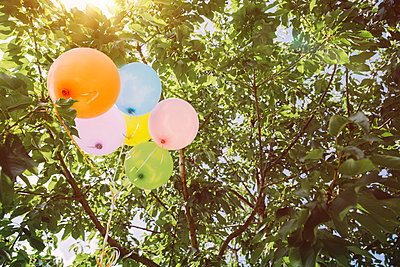 Helium ballons hanging in trees - p300m965138f by Mareen Fischinger