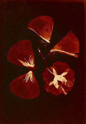 Petals - p945m2163774 by aurelia frey