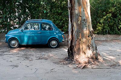 Big tree; small car - p951m853306 by Caterina Sansone