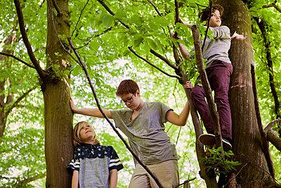 Drei Jungen im Baum - p1195m1138127 von Kathrin Brunnhofer