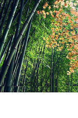 Kanagawa - p6520389 by Christian Kober