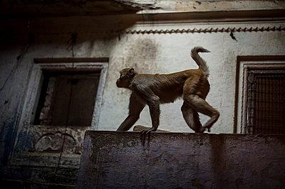 Varanasi - p1007m1060017 by Tilby Vattard