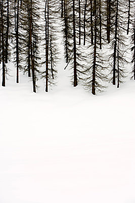 Snowed In - p2480656 by BY