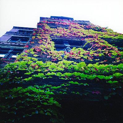 Overgrown facade - p7560172 by Bénédicte Lassalle