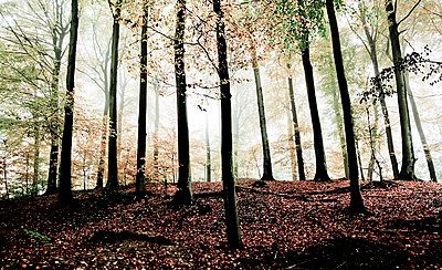 The autumn forest - p1221m1064167 by Frank Lothar Lange