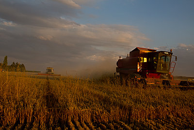 Combine harvesters at work at sunset - p1484m2289431 by Céline Nieszawer