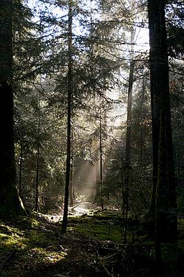 Licht  - p3050180 von Dirk Morla