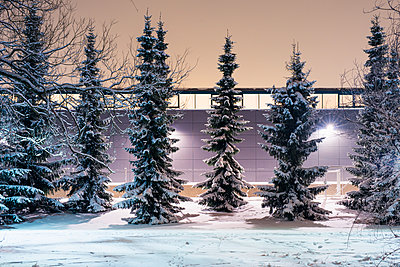 Finland, Pirkanmaa, Tampere, Row of snow-covered trees against illuminated wall - p352m1127504f by Jukka Aro