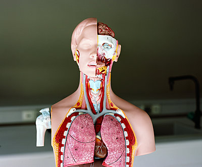 Anatomic model chest - p453m2152869 by Mylène Blanc