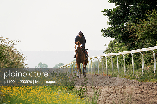 Woman on a horse riding along a cinder path with a railing. Racehorse training on the gallops.