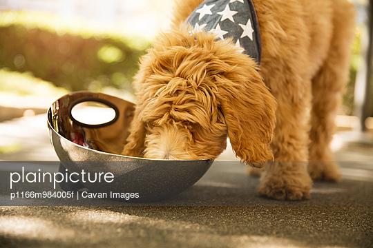 p1166m984005f von Cavan Images