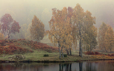 Autumn colour along the shore of Loch Tummel with mist lingering in the valley, Scottish Highlands, Scotland, United Kingdom, Europe - p871m1221538 by Garry Ridsdale