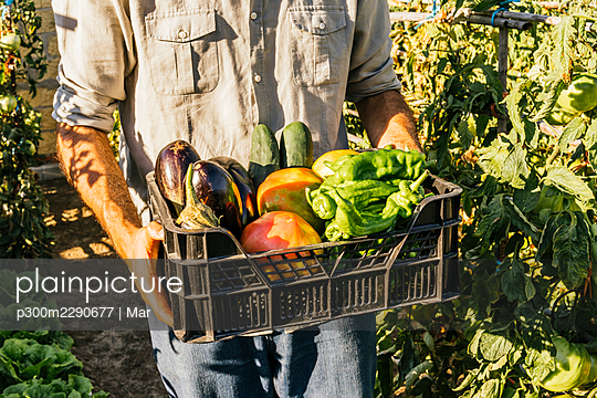 Young man carrying crate of fresh vegetables in garden - p300m2290677 by Mar