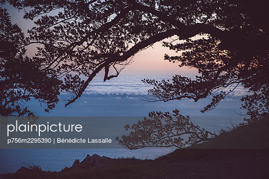 Cloud cover at sunrise, tree in the foreground - p756m2295390 by Bénédicte Lassalle