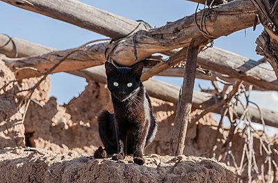 Schwarze Katze - p1357m1222153 von Amadeus Waldner