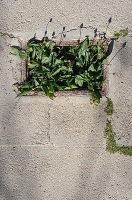 Plants growing in a hole - p1657m2263545 by Kornelia Rumberg