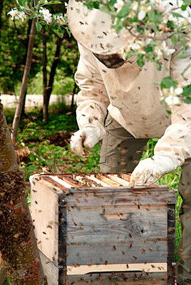 Beekeeper with a beehive - p2350550d by KuS