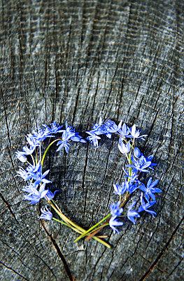 Herz aus Frühlingsblüten - p533m1169619 von Böhm Monika
